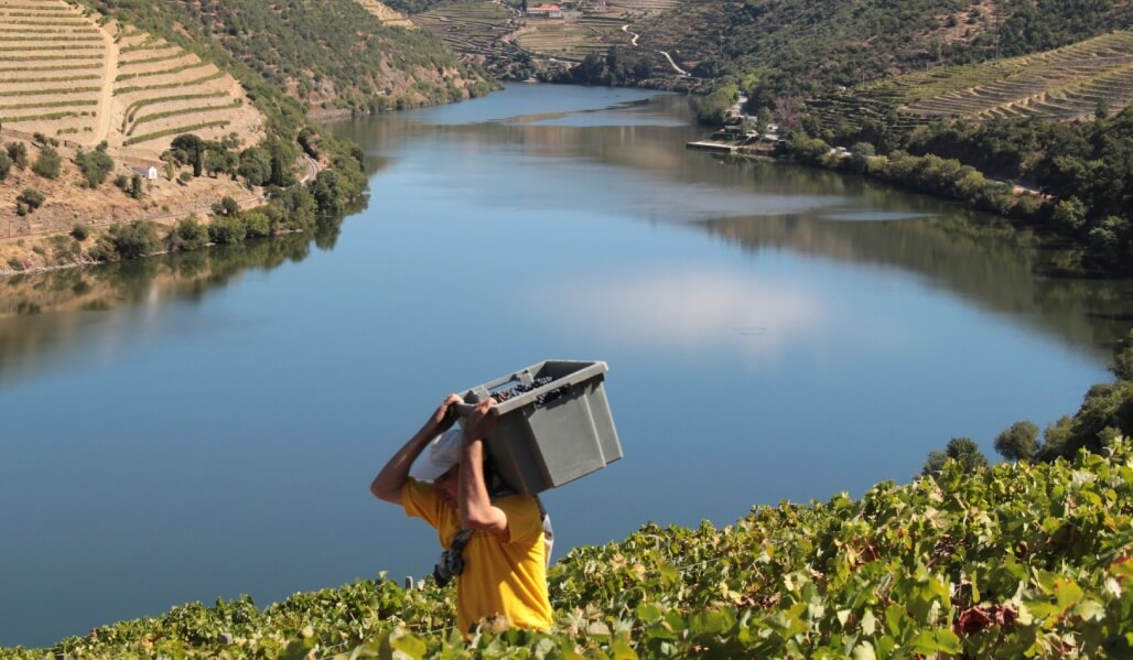 A Quinta do Pôpa has one of the best viewpoints in the Douro.