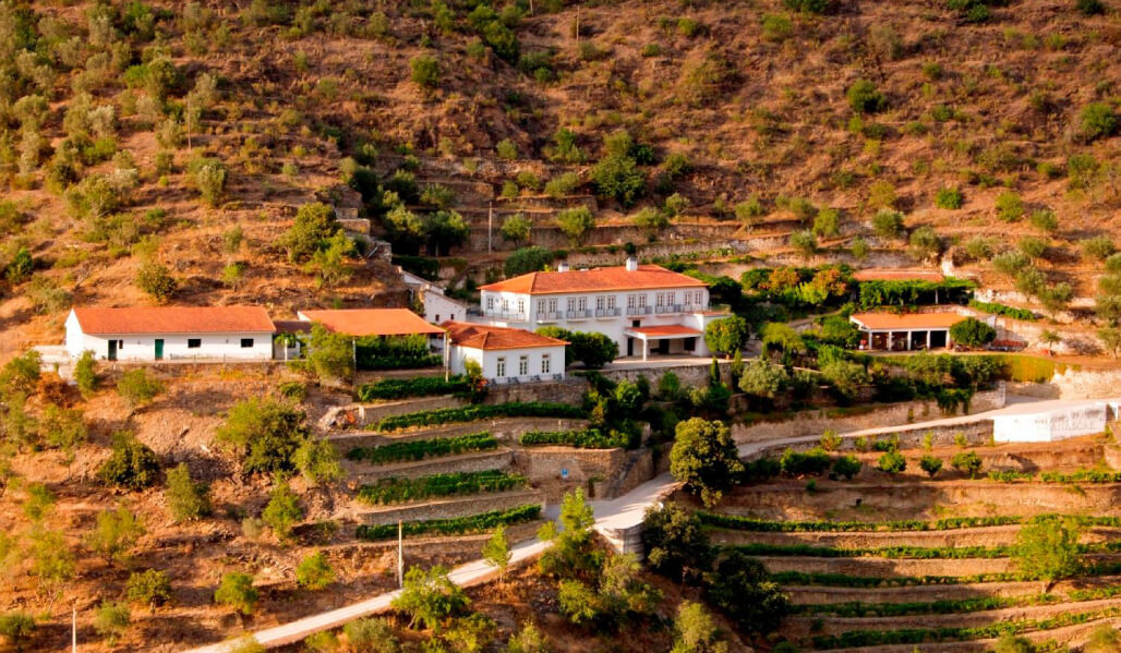 Quinta do Panascal was one of the first properties in the region to get organic certification for its vineyards.